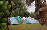 Tents in Hawaii